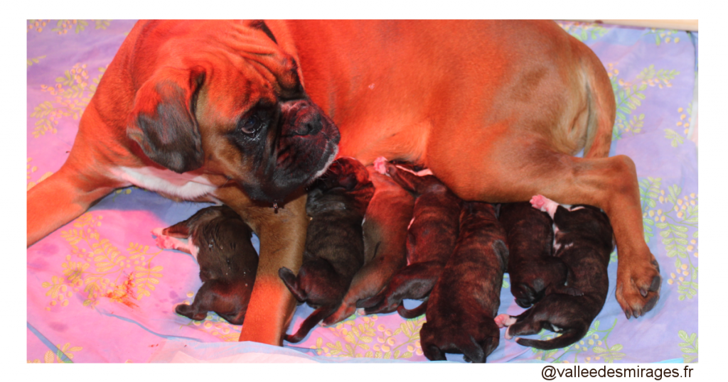 Les bébés boxers sont nés !