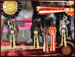 Exposition nationale canine de Tarbes